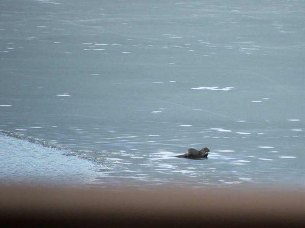 Otter eat