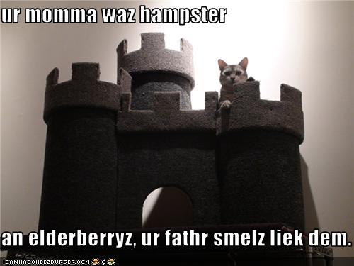 Funny-pictures-cat-has-castle