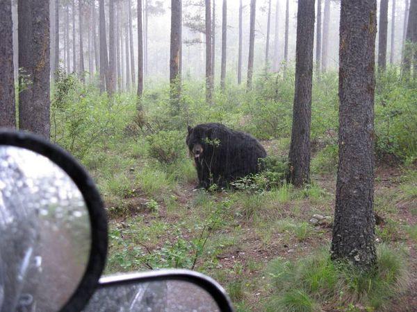 Bear car