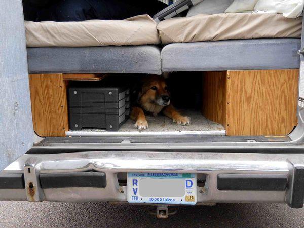 Fortress Doggie