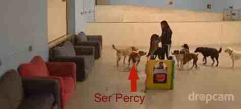 Percy @ doggie daycare