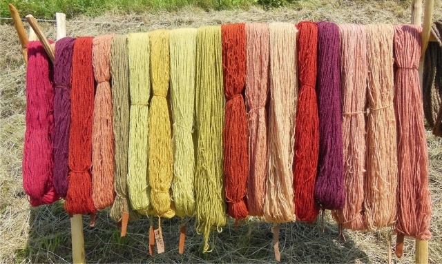dyed skeins drying