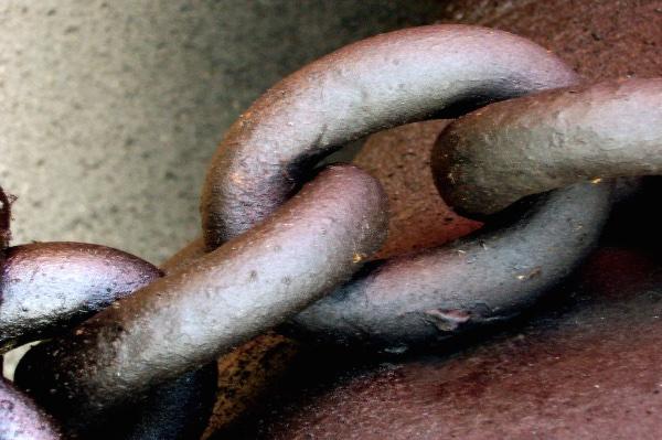 Fleshy link
