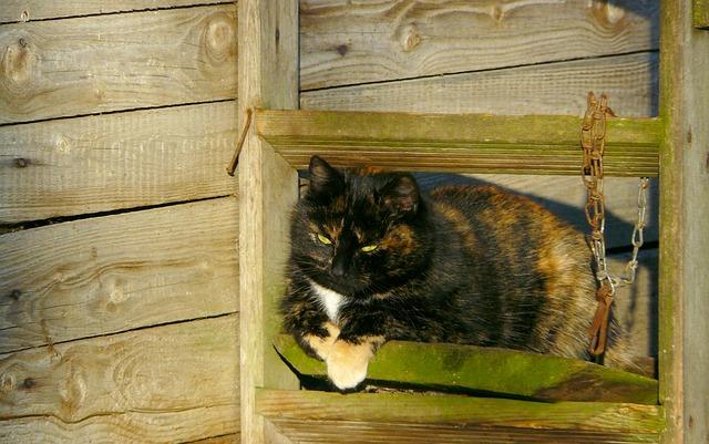 Chain, barn cat.jpg