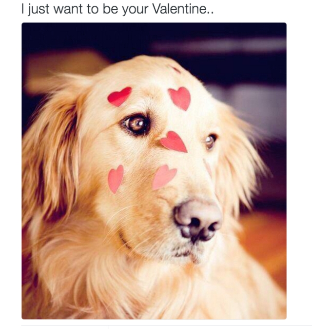 Golden dog valentine.jpg