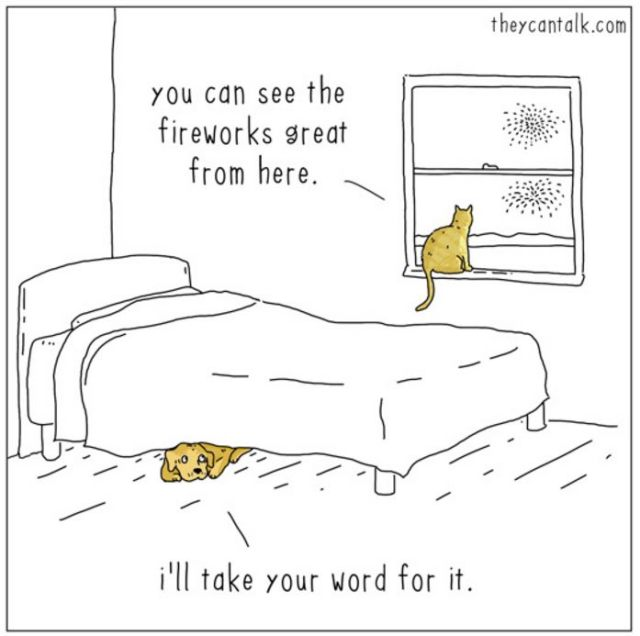 Fireworks cat dog
