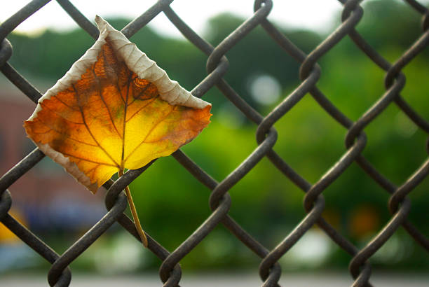 autumn link.jpg