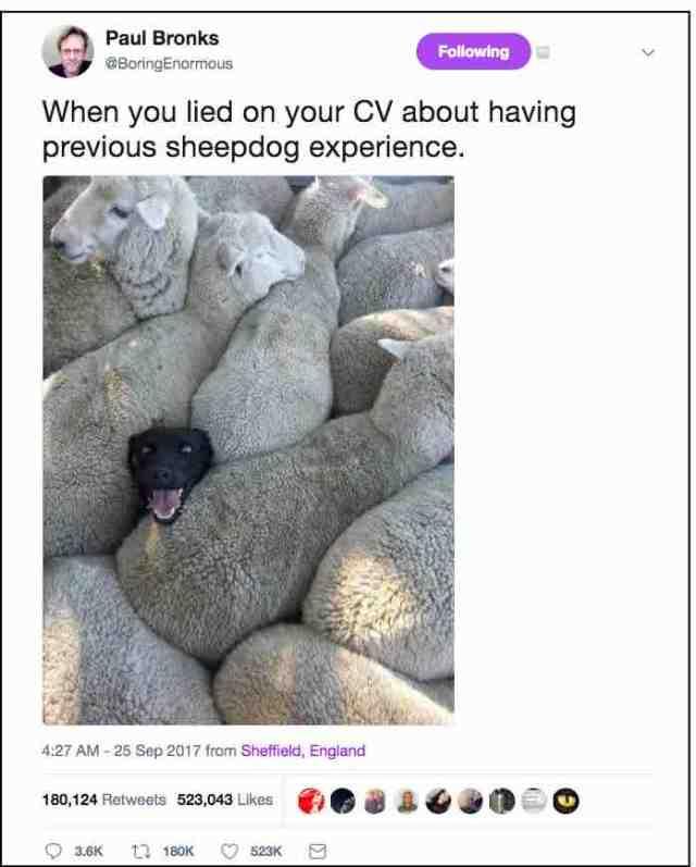 Sheepdog experience tweet.jpg