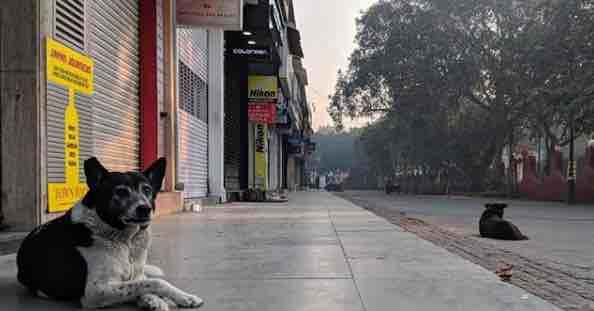 Delhi dog