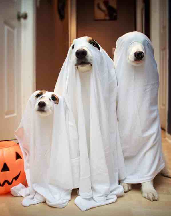 Ghostly dogs.jpg