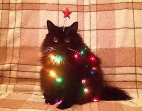 christmas cat w lights.jpg
