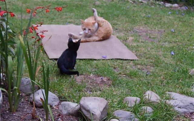 Cats butt_2.jpg