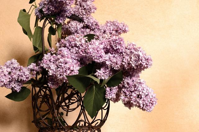 lilac-4173730_640.jpg
