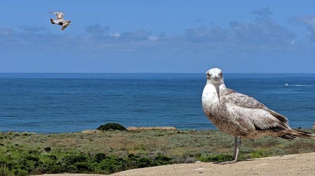 seagulls from Matthew.jpg