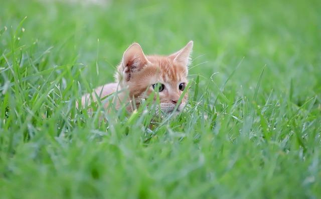 cat-4396302_640