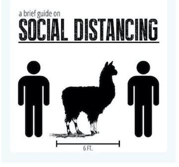 llama social distancing