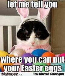 cat easter bunny