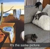 dali cats