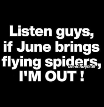 juneflying spiders