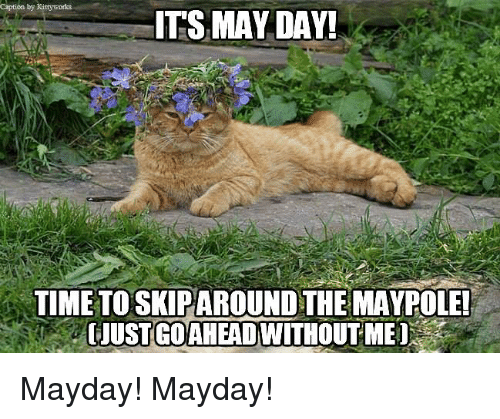 May Day cat.png