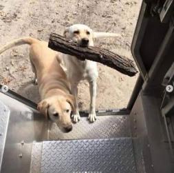 UPS 2 dogs stick