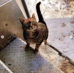 UPS cat