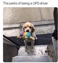 UPS puppy toy