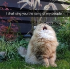 cat song of my people