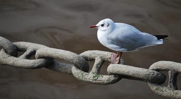 chain w gull