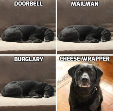 cheese wrapper