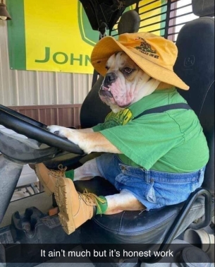 dog on tractor