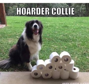 hoarder collie