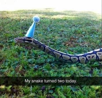 snake b'day