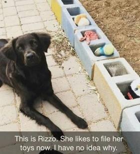 dog files toys